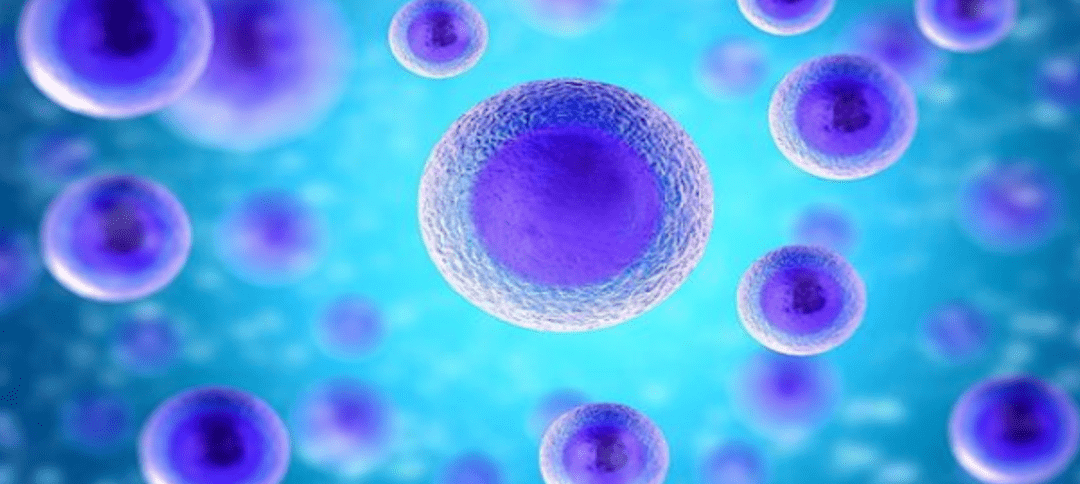 Stem Cell Transplant Benefits for Patients with MS